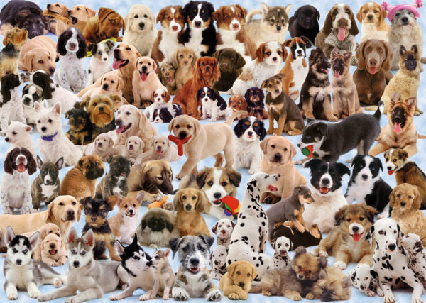 Dogs Galore!