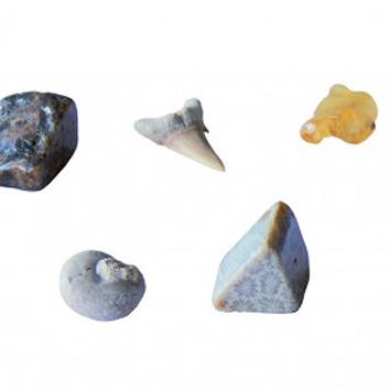I Dig It! Fossils - Real Fossils Excavation Kit