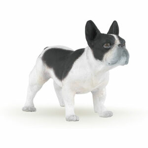French Black And White Bulldog